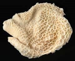 Honeycomb Tripe