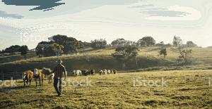 meat online farmers in paddock